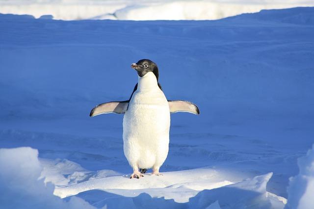 ペンギン系女子ってなに?|理由と由来を知ろう♪
